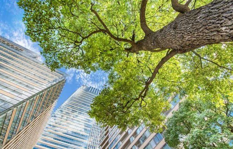 Startups sustentáveis